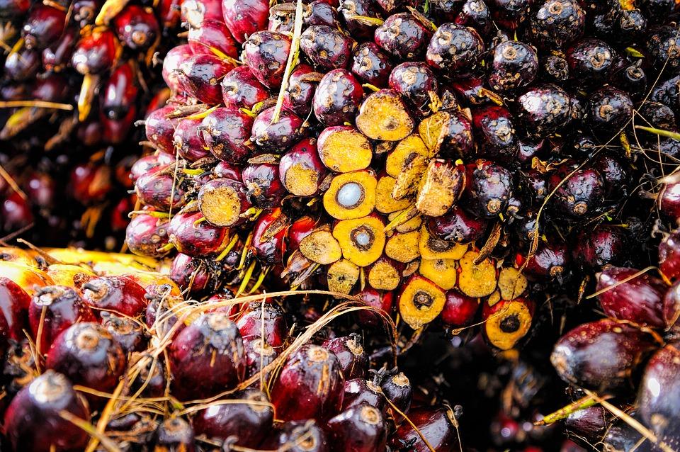 Perché evitare l'olio di palma?